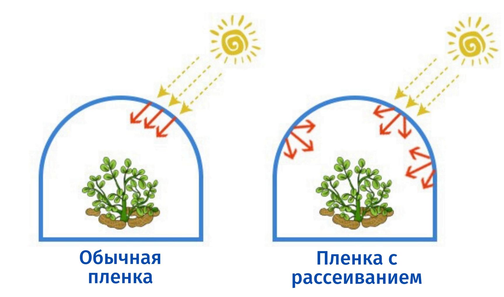 Тепличные пленки с рассеиванием солнечного света